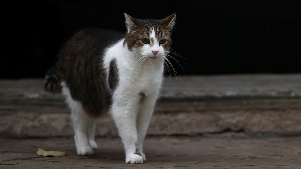 10 yıldır kayıp olan kedi, mikroçip sayesinde evine geri döndü