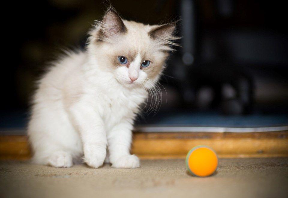 Kedi videosu izleyecek gönüllüler aranıyor - Sayfa 2