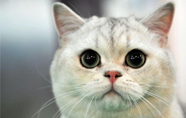 Kedi videosu izleyecek gönüllüler aranıyor - Sayfa 1