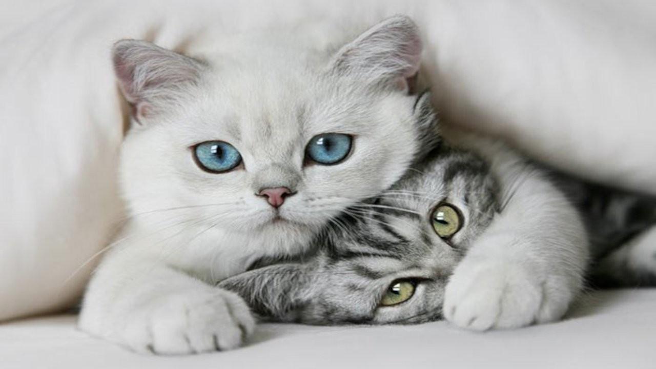 Kedi videosu izleyecek gönüllüler aranıyor
