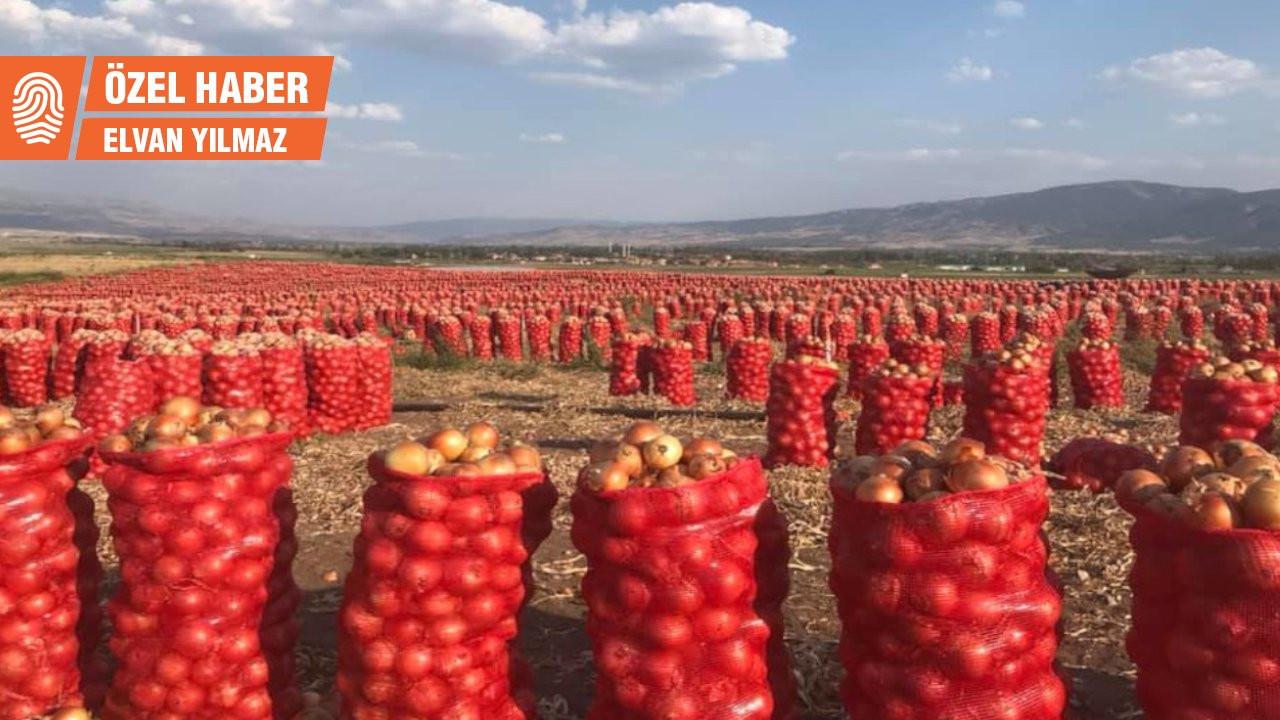 Üreticinin derdi çözülmüyor: Soğan fiyatı maliyetinin çok altında