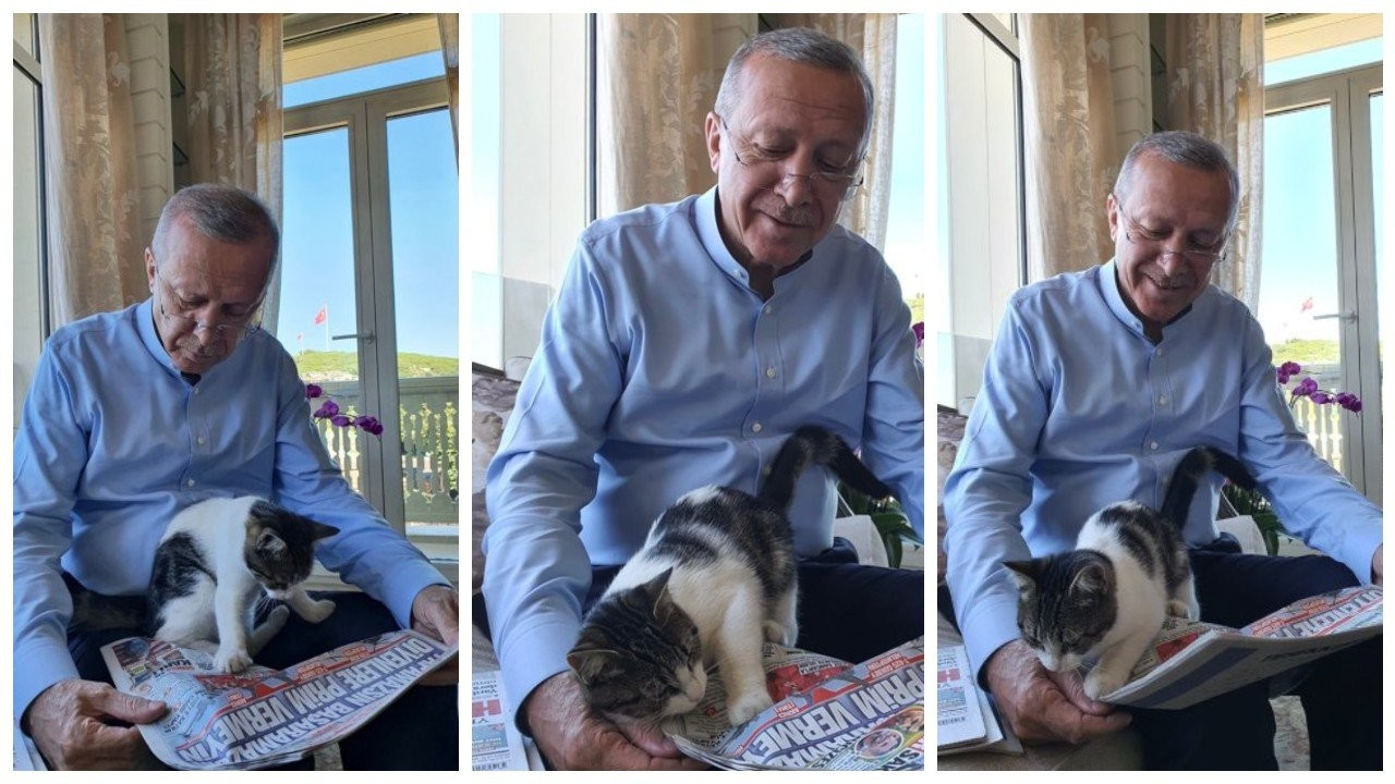 Cumhurbaşkanı Erdoğan kedili fotoğraflar paylaştı