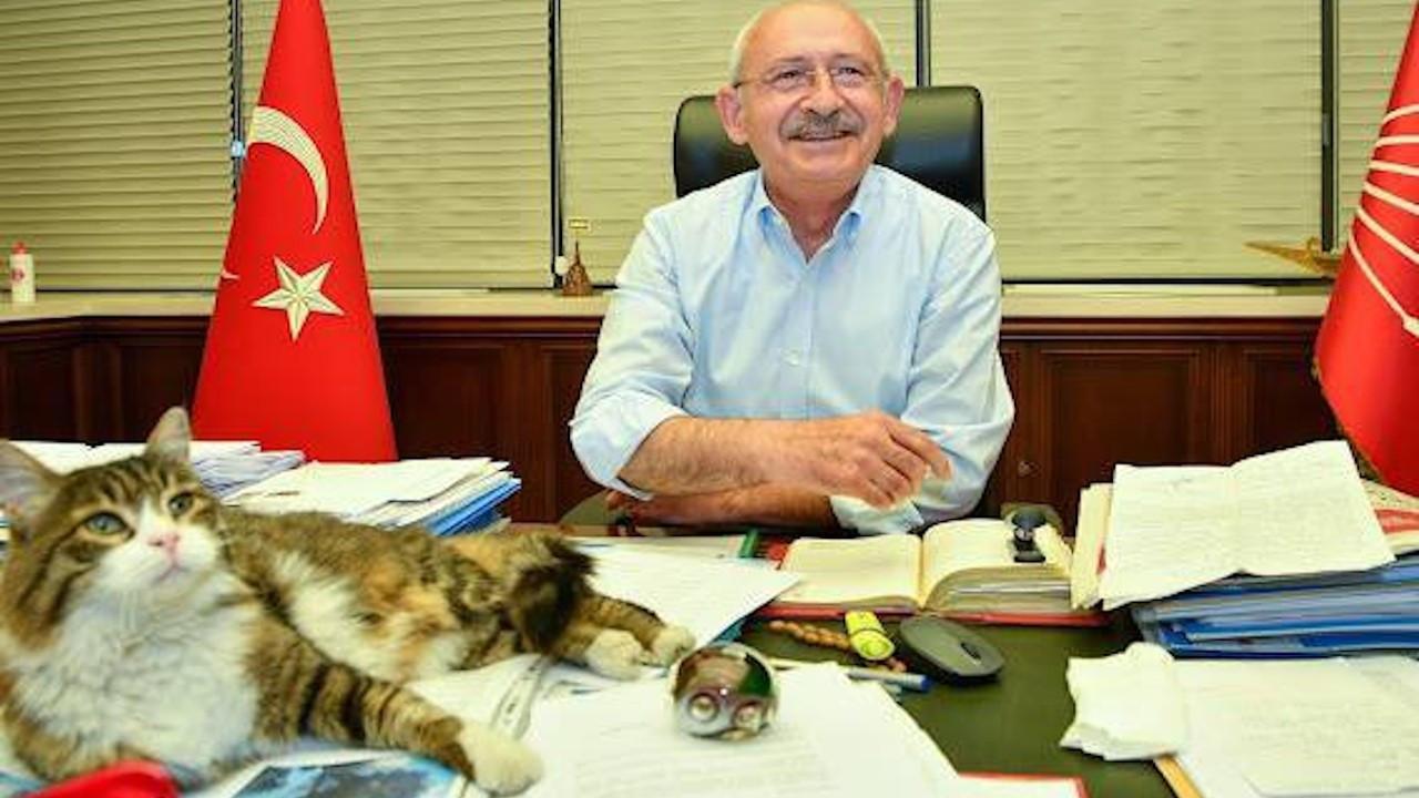 Kılıçdaroğlu'ndan 'kedili' paylaşım: Güzel günlere bakıyoruzdur