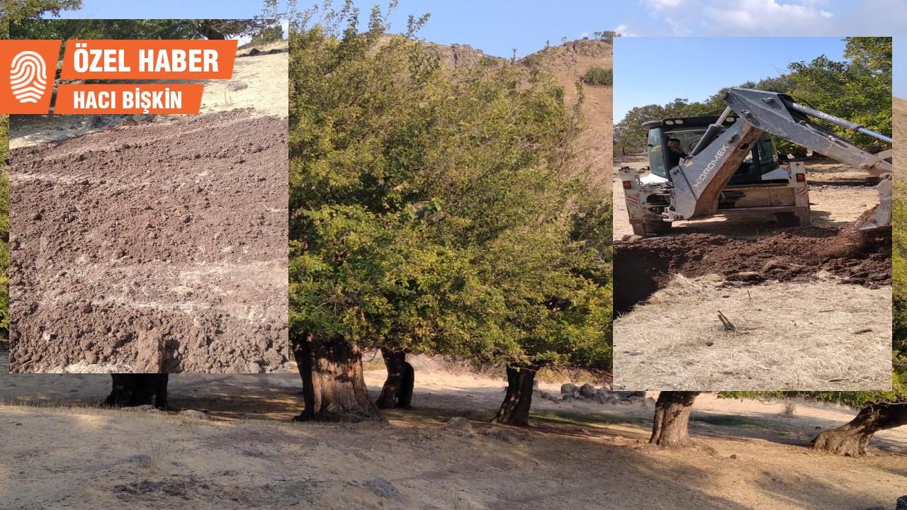 Dersim'de tarihi dut bahçesine belediye projesi