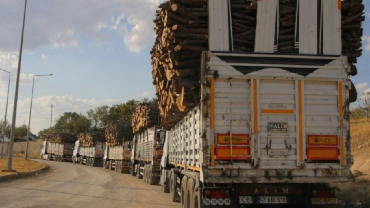 Şırnak Barosu'ndan ağaç katliamına ilişkin suç duyurusu