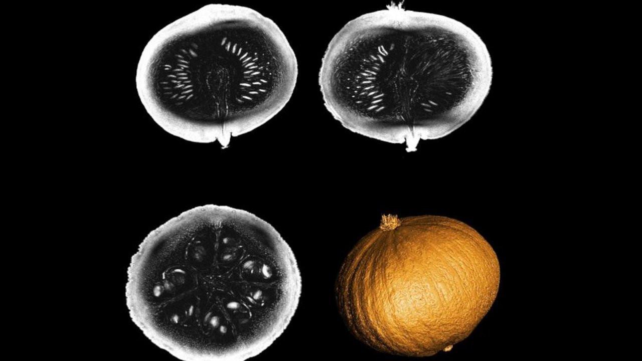 En güçlü MRI tarayıcının aktardığı ilk görüntüler balkabağından
