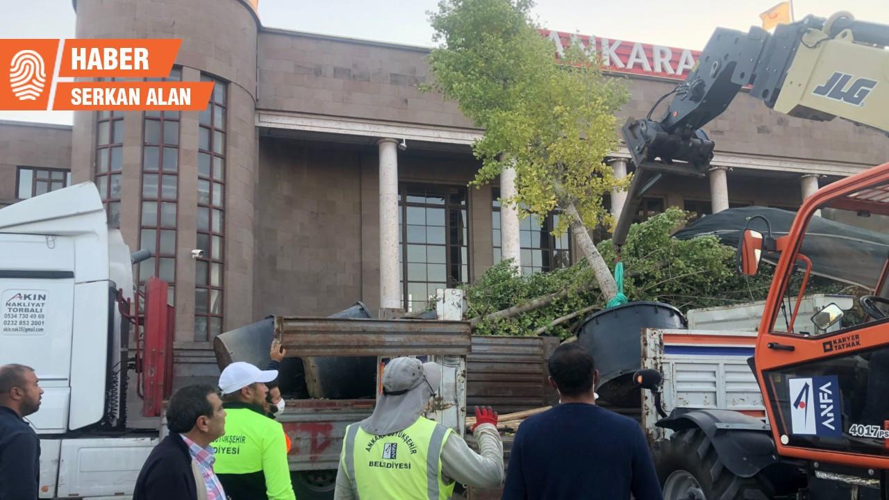 Ankara Valiliği, 10 Ekim'de katledilenleri temsil eden ağaçları kaldırdı