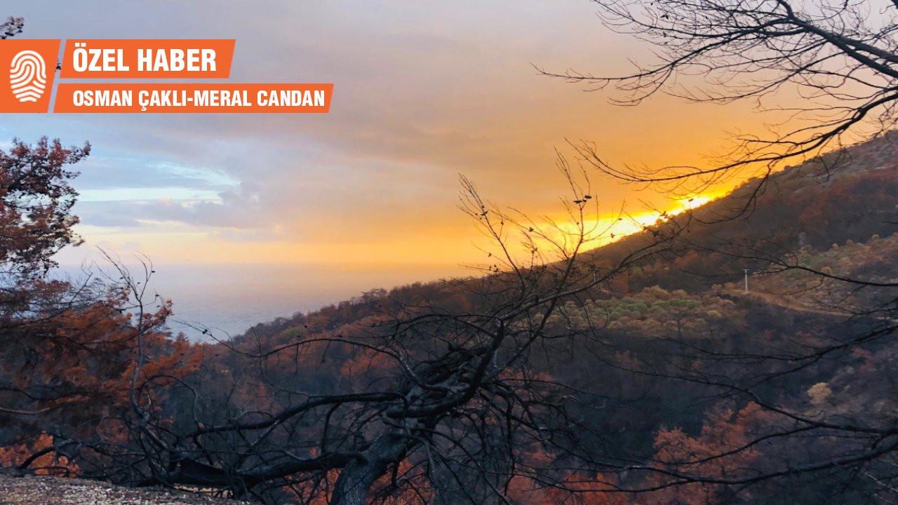 Muğla'da yangından iki ay sonra köylüler: Sahipsiziz