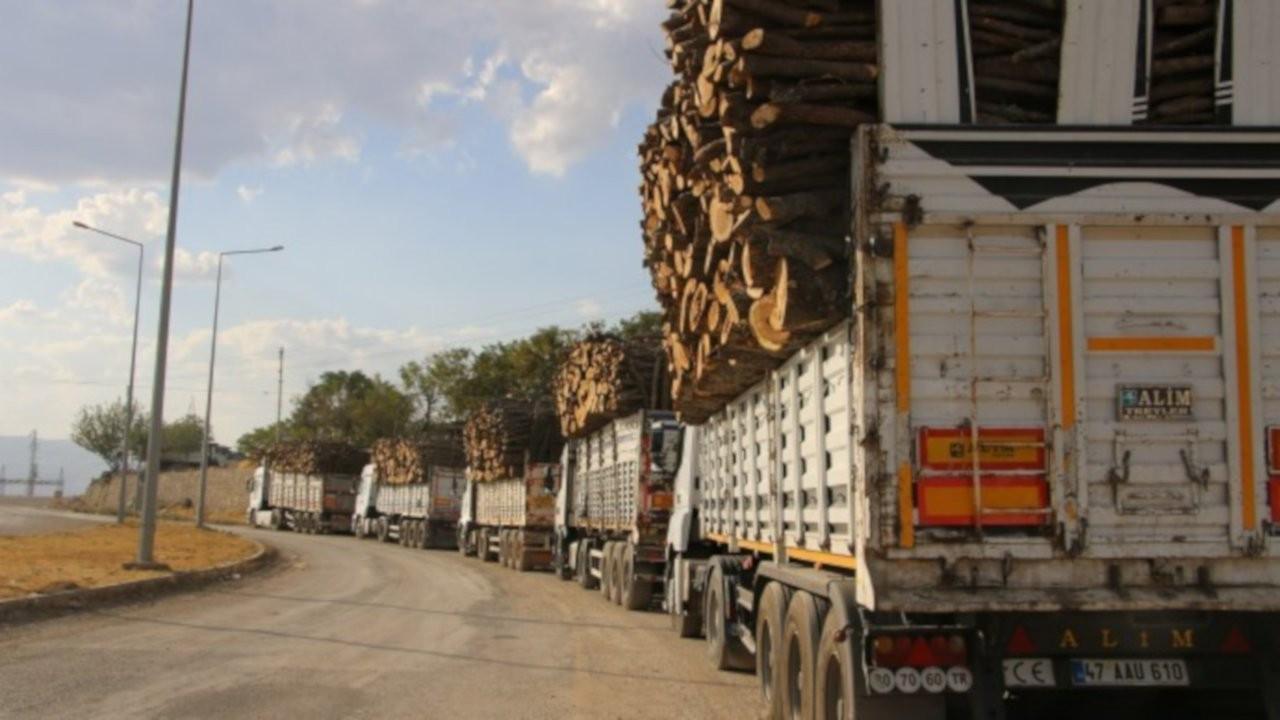 Şırnak'ta orman varlığı 7 ayda en az yüzde 8 azaldı