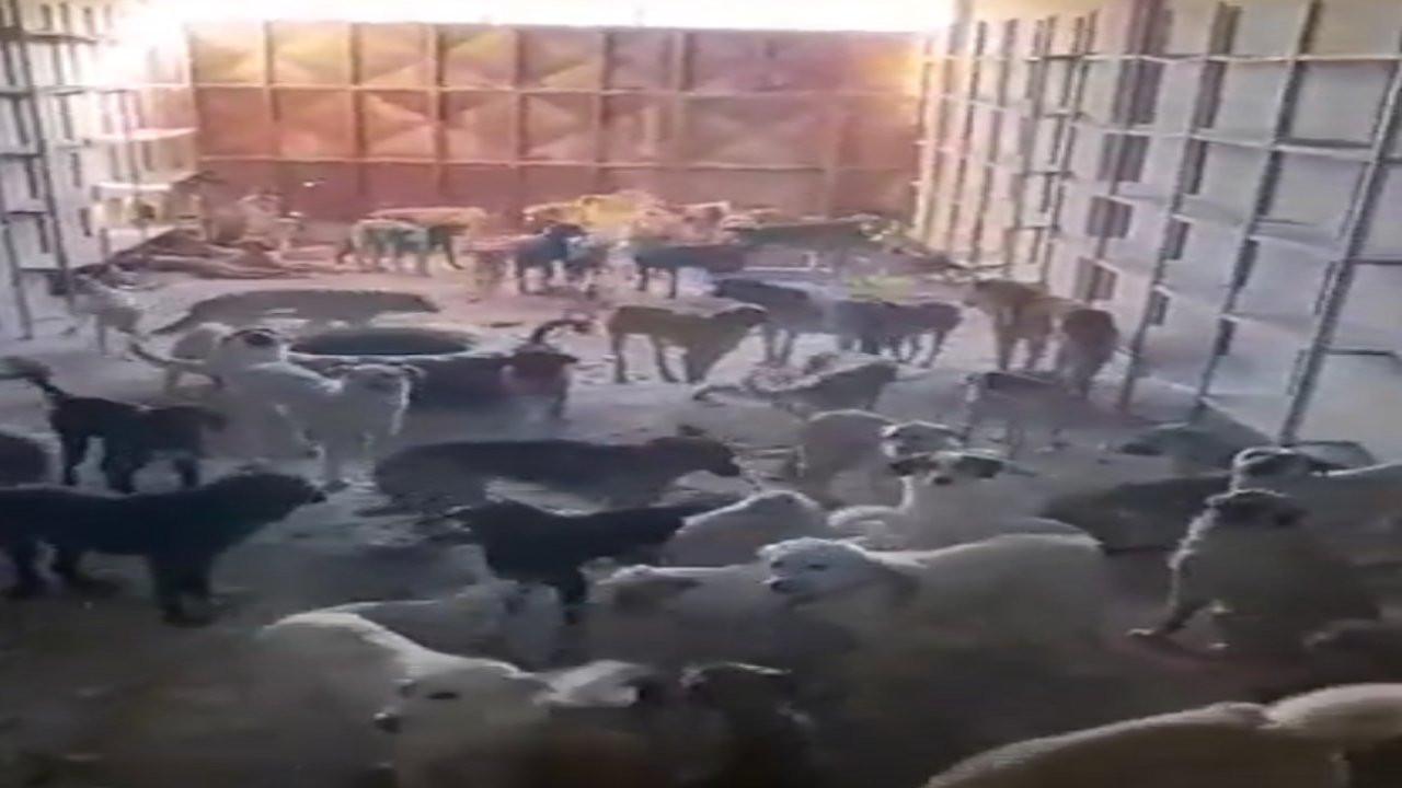 Konya'da şantiyede tutulan 70 köpeğin akıbeti belli değil