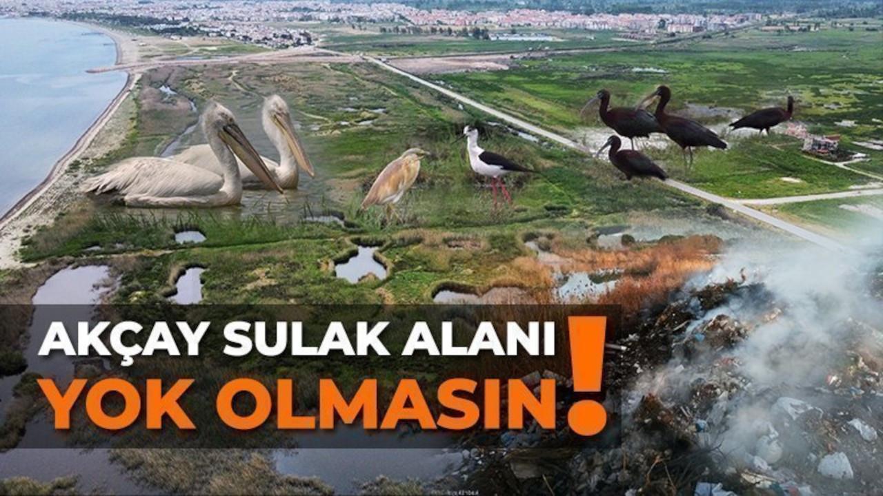 Kuzey Ege'nin son sulak alanı için kampanya: Molozlarla yok edilmesin