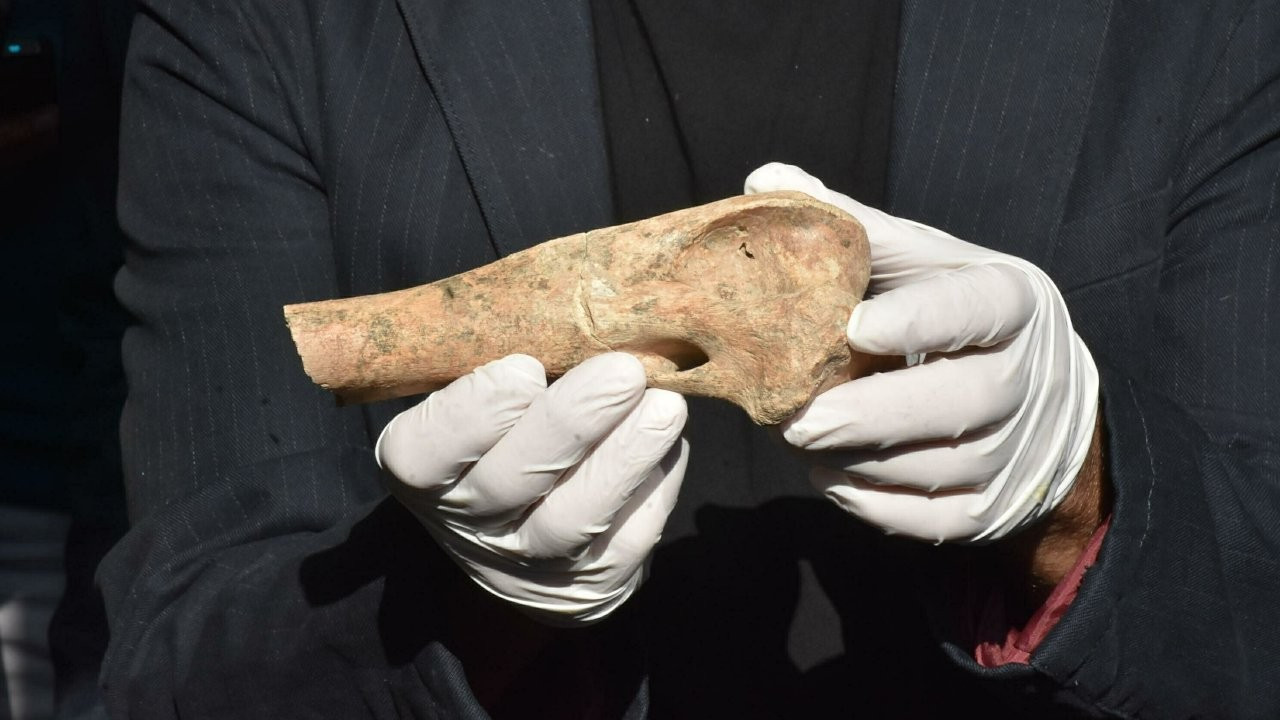 Antik yerleşimde tarihi buluş: İzmir'de aslan da varmış