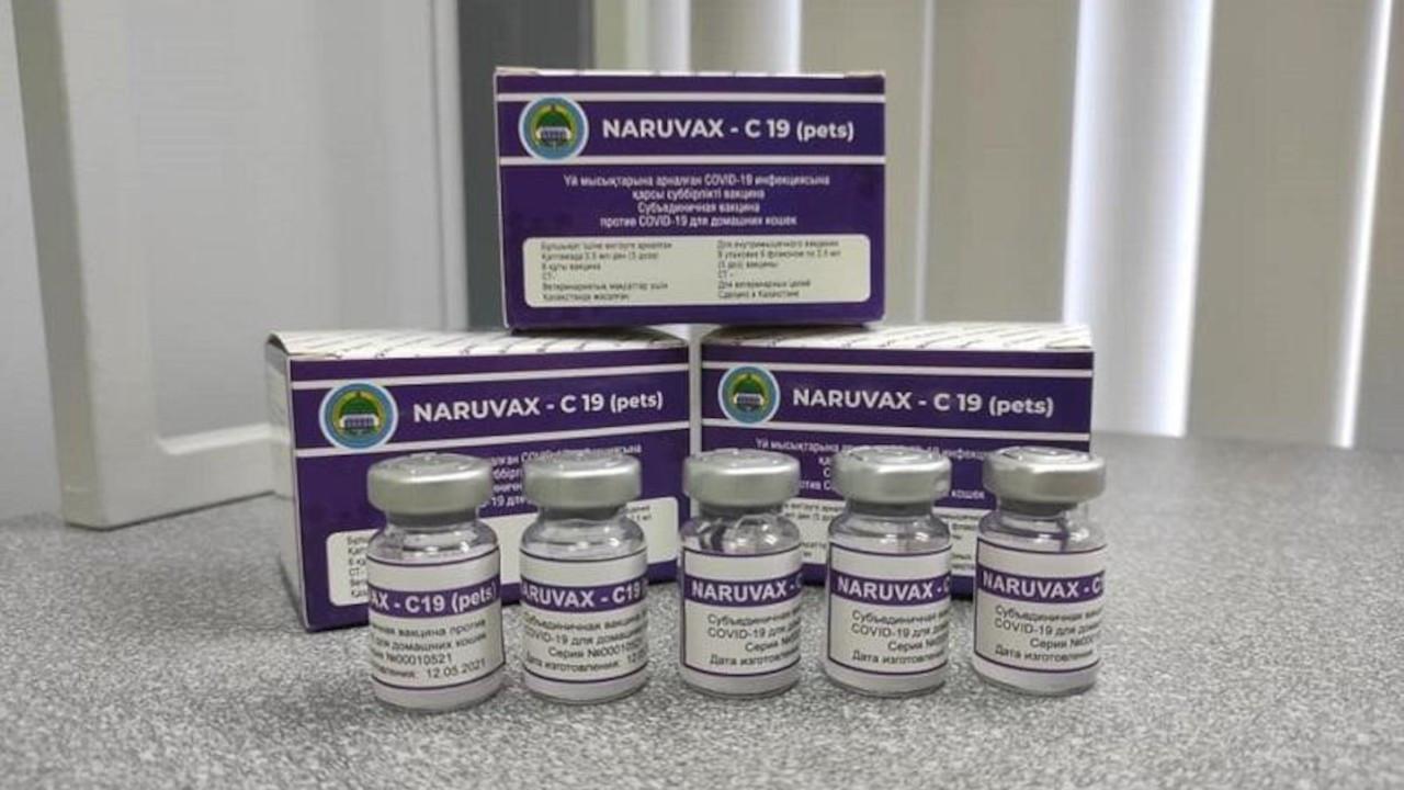 Kazakistan'da kediler için Covid-19 aşısı geliştirildi