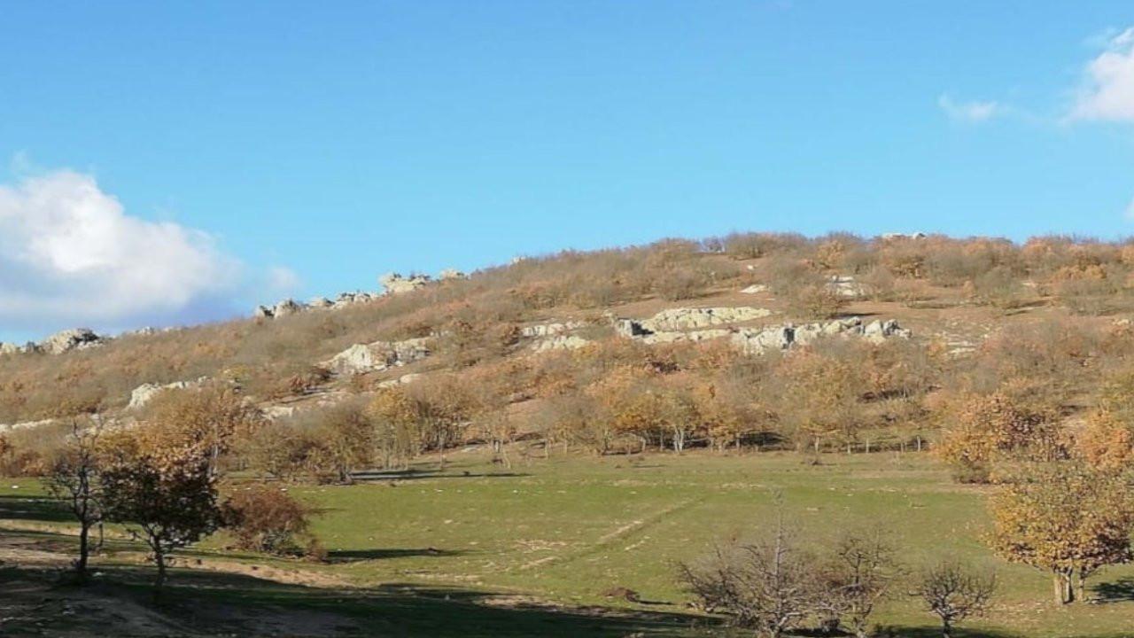 Kırklareli'nde kalker ocağı için 19 bin 526 ağaç kesilecek