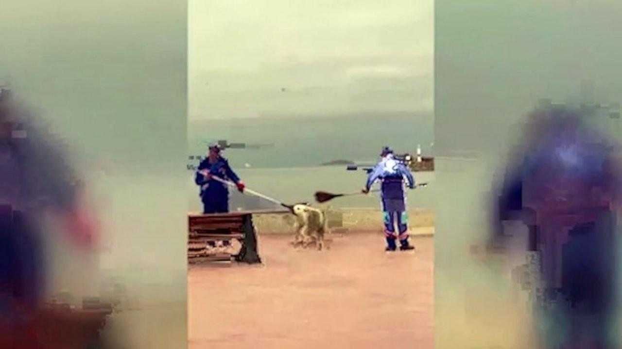 Temizlik personeli ile sokak köpeğinin görüntüleri gündem oldu